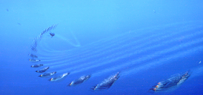 ハッピーフィート:航空ショーのような水中遊泳