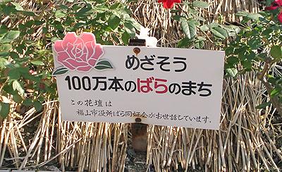 目指そう100万本の薔薇