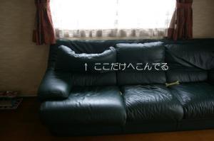 IMGP6140.jpg