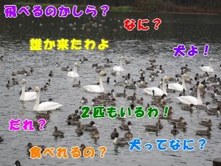 20111122_6.jpg