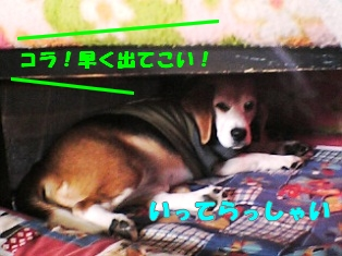 20120115_1.jpg