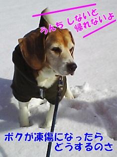 20120129_4.jpg