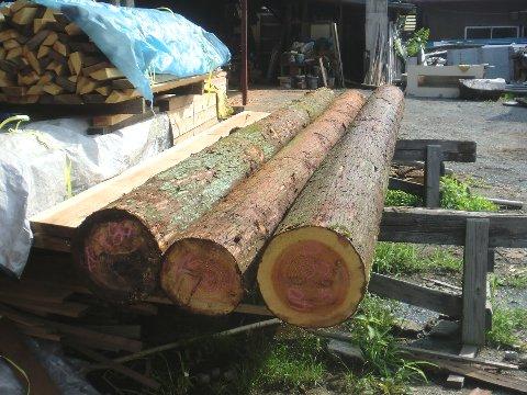 5m杉丸太