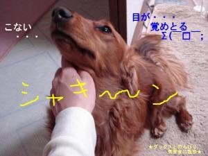 20070401010159.jpg