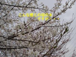 20070404192238.jpg