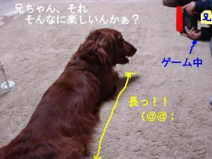 20070406002101.jpg