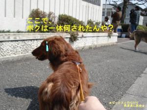 20070413095913.jpg