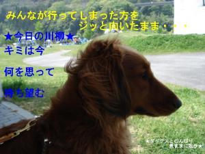 20070505234139.jpg