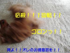 20070520164844.jpg