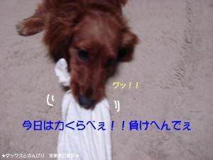 20070528231423.jpg