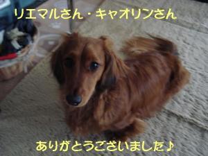 20070605093118.jpg