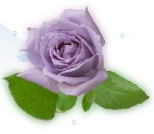 blue-rose.jpg