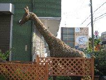garden-giraffe.jpg