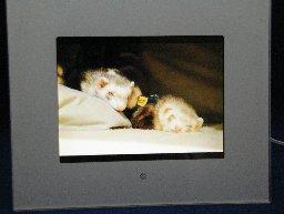 gw-frame2.jpg