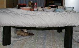 penne-under-kotatsu1.jpg