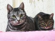 メグと太郎