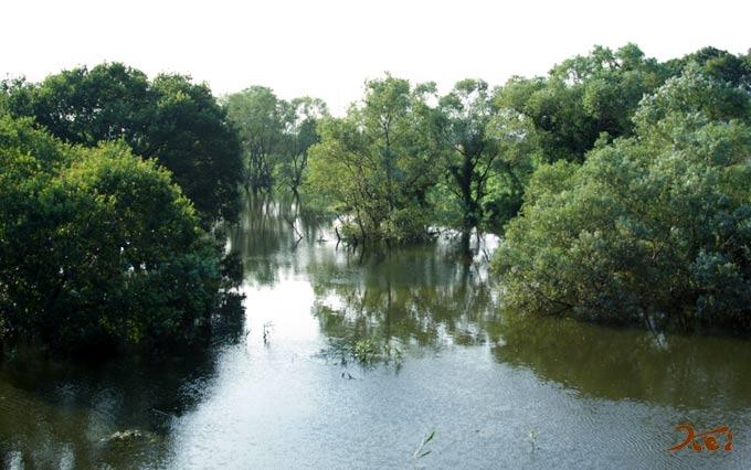 川の木01