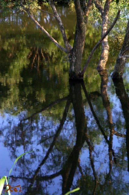 川の木04