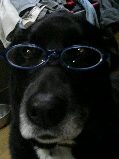 メガネっこ