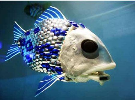 珍しい水中生物