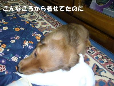20061110204318.jpg