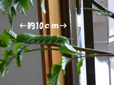 P1000999.jpg