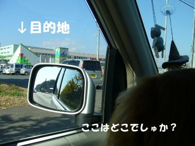 P1030574.jpg