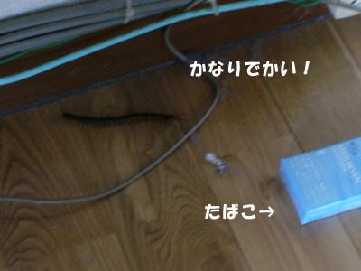 P1050384.jpg