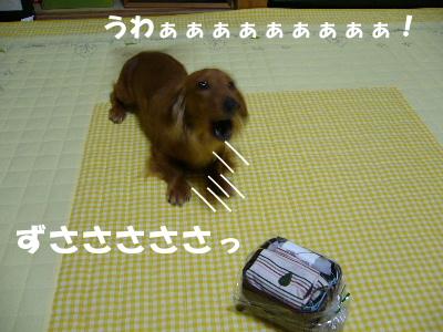 P1090058.jpg