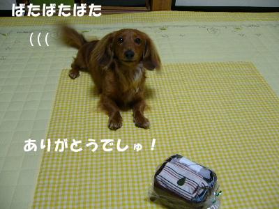 P1090059.jpg