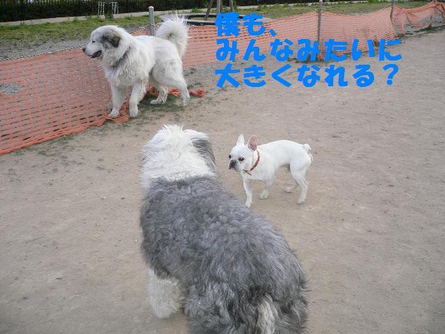 20070320121902.jpg