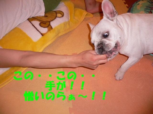 20070407124750.jpg