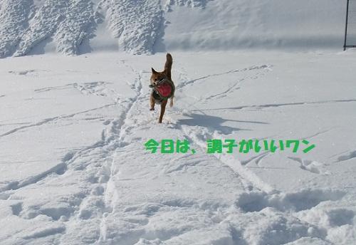 DSCF0360.jpg