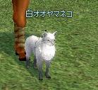 白オオヤマネコ