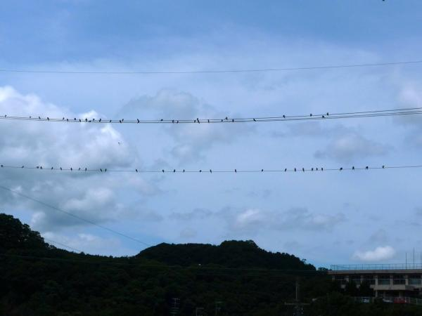 海草郡紀美野町 三尾川で遊び2011-09