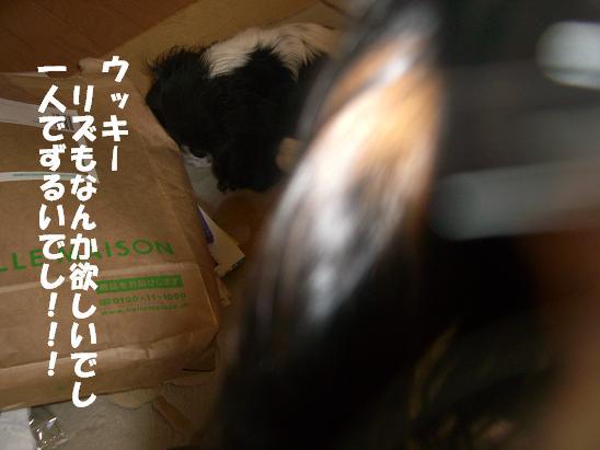 20070221182926.jpg