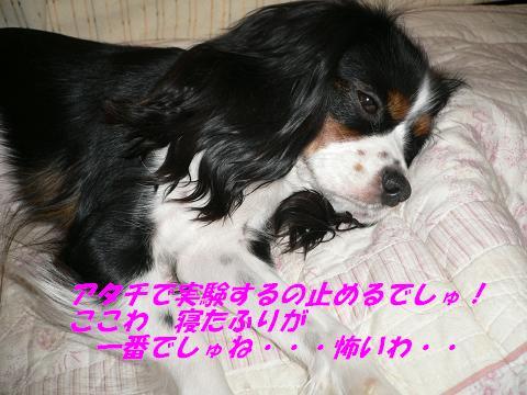 P1000618.jpg