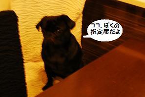 3月2日・3日 パグ友ちゃんと・・・ 180