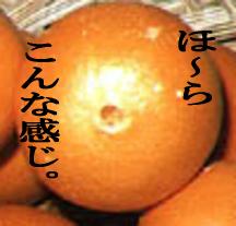 似ている…!3