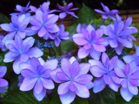 紫陽花園(ダンスパーティー)