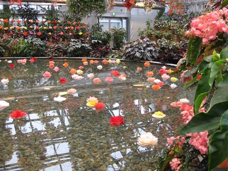 ベゴニア館の池