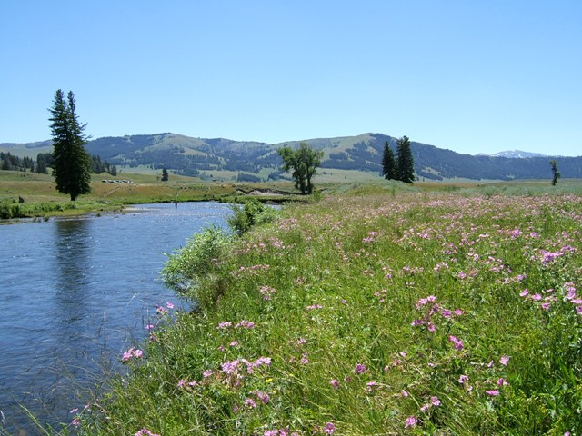Slough Creek 2