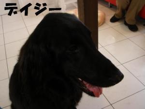 20070204194003.jpg