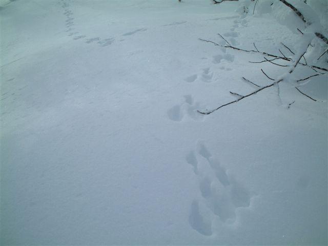 山頂まで続いていたウサギの足跡