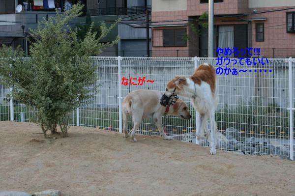 IMG_0785.jpg