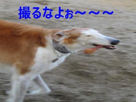 IMG_1572.jpg