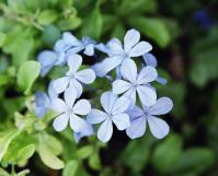 ブルーお花