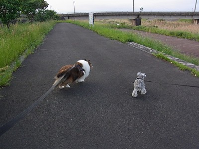 高尾野で歩く