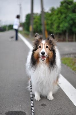 お散歩はいいね~