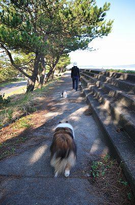日陰を歩こう